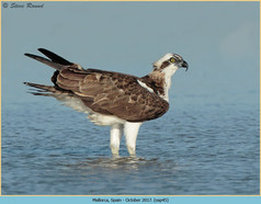 osprey-45.jpg