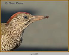 green-woodpecker-08.jpg