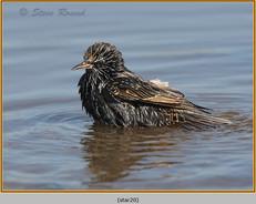 starling-20.jpg