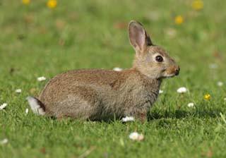 rabbit-1.jpg