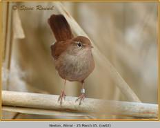 cettis-warbler-02.jpg