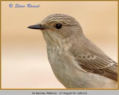 spotted-flycatcher-12.jpg