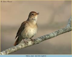 nightingale-13.jpg