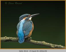 kingfisher-28.jpg