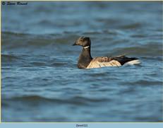 brent-goose-32.jpg