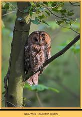tawny-owl-05.jpg