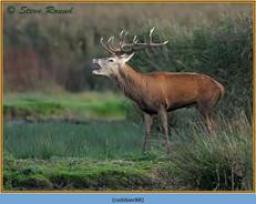 red-deer-88.jpg
