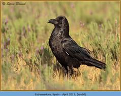 raven-60.jpg