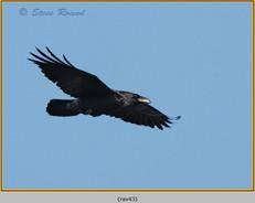 raven-43.jpg