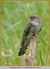 cuckoo-15.jpg