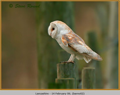 barn-owl-02.jpg