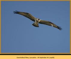osprey-08.jpg