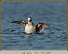 long-tailed-duck-21.jpg