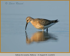 curlew-sandpiper-03.jpg