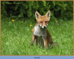 fox-78.jpg