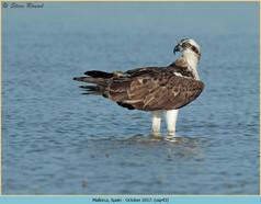osprey-43.jpg