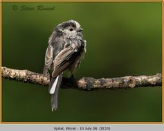 long-tailed-tit-33.jpg