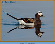 long-tailed-duck-35.jpg