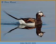 long-tailed-duck-35.jpg