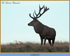 red-deer-55.jpg