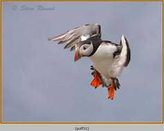 puffin- 51.jpg