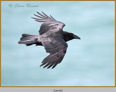 raven-16.jpg