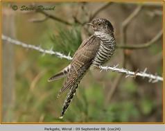 cuckoo-24.jpg