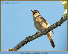nightingale-09.jpg