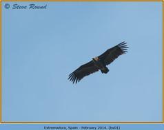black-vulture-01.jpg
