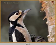gt-s-woodpecker-47.jpg