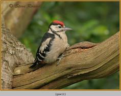 gt-s-woodpecker-11.jpg