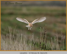 barn-owl-19.jpg