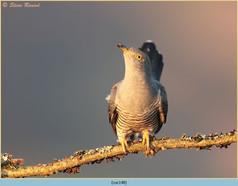 cuckoo-148.jpg