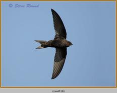 swift-18.jpg