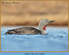 red-throated-diver- 84.jpg