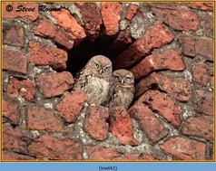 little-owl-42.jpg