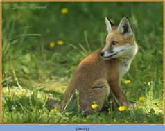 fox-51.jpg