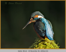 kingfisher-16.jpg