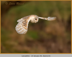 barn-owl-13.jpg