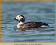 long-tailed-duck-15.jpg