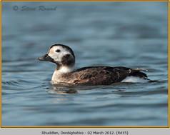 long-tailed-duck-15.jpg