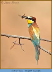 bee-eater-02.jpg
