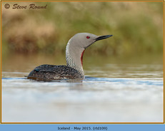 red-throated-diver-109.jpg
