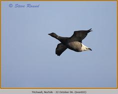 brent-goose-02.jpg