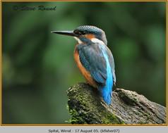 kingfisher-07.jpg