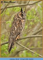 long-eared-owl-02.jpg