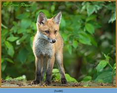fox-88.jpg