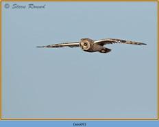 short-eared-owl-69.jpg