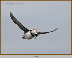 puffin- 53.jpg