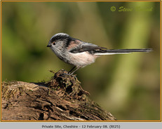 long-tailed-tit-25.jpg